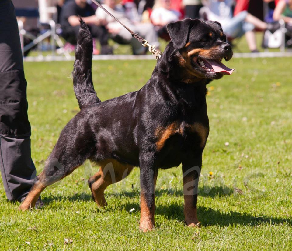 TOSI on IFR 2013 Wold Dog Show