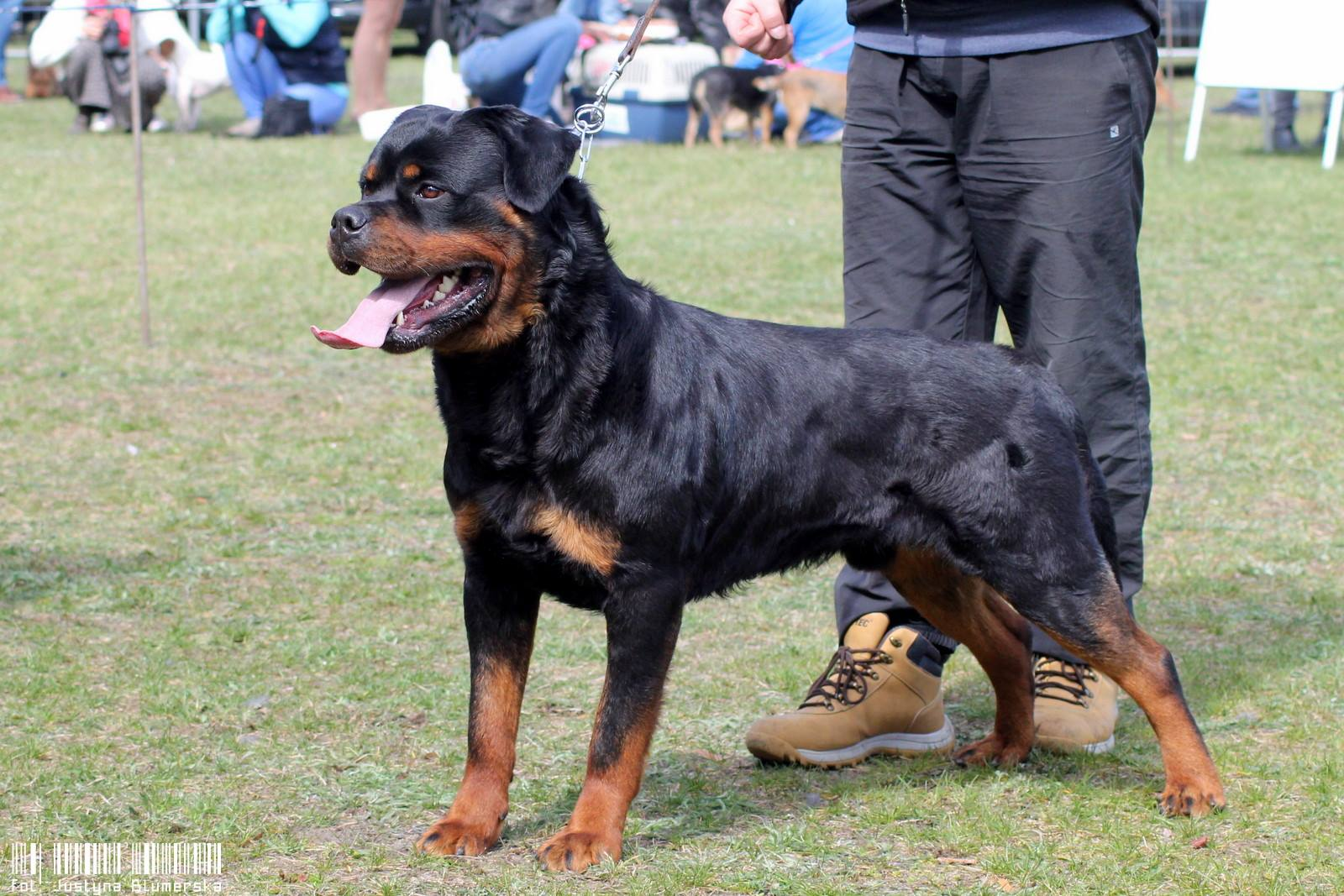 Bad Boy Lewirot wins Best of Breed!