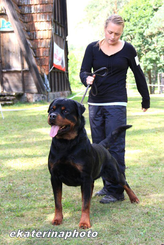 ROTTWEILER CLUB SHOW - LITHUANIA 2012