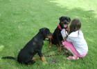 Odwiedzyny rodziny czyli jak dzieci opiekują się psami