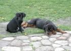 Visit of labrador friend Emi