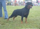 At the dog show (August 2007)