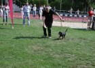 Little Bibi as visitor at the dog show.